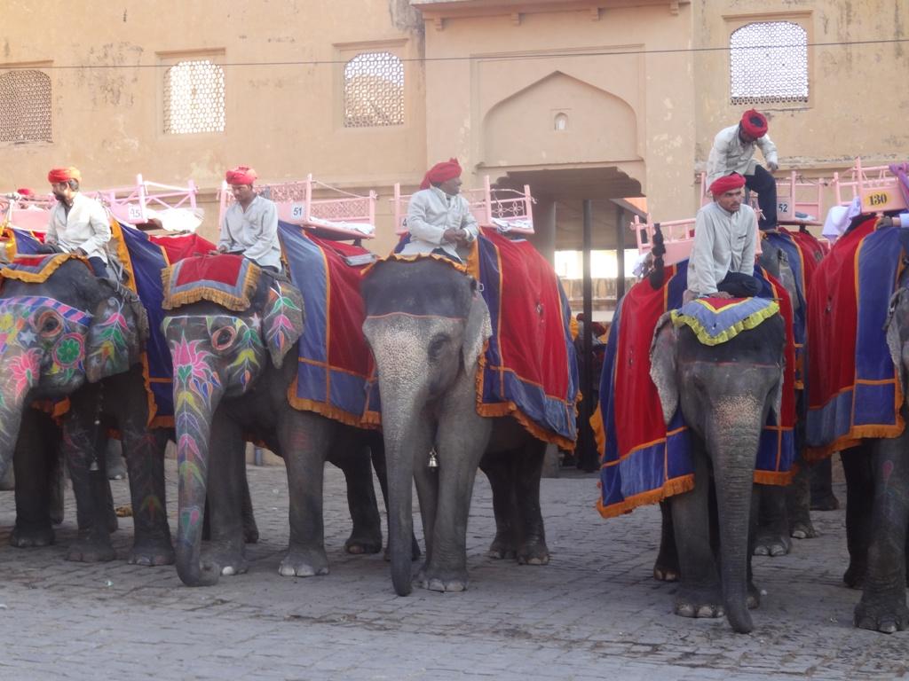 Elephant waiting for tourist